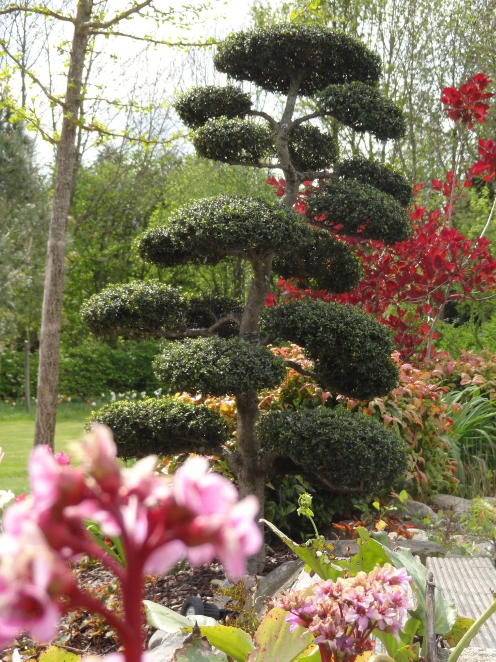 Taille topiaire arbres massifs rebeyrol - Massif jardin contemporain limoges ...