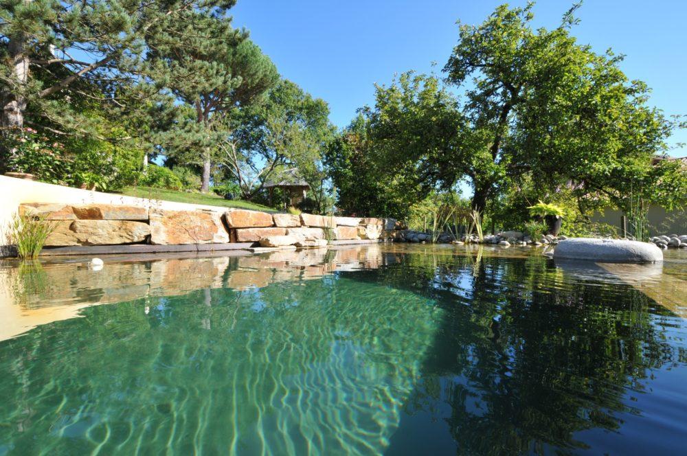 Bassin de baignade vue de l'eau - Bassin de baignade biologique