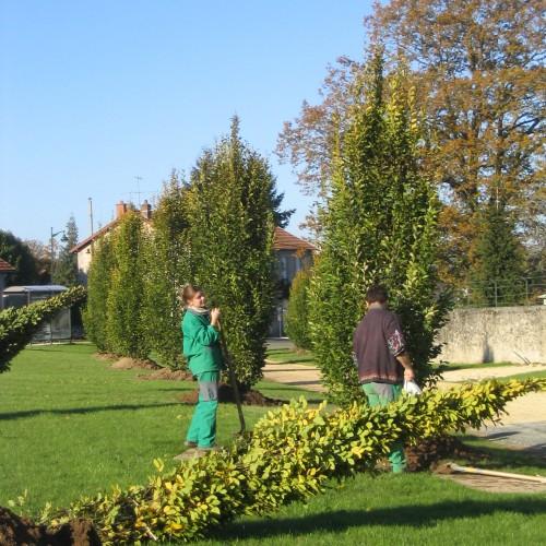 entretien, entretien jardin, entretien jardin limoges, plantation limoges, plantation arbre limoges, rebeyrol
