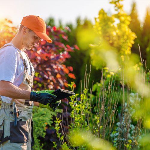 rebeyrol, limoges, 87, entretien des jardins, taille limoges, tonte limoges, entretien jardin limoges