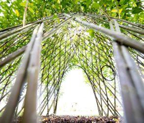 Portes ouvertes: «Le végétal au jardin»!